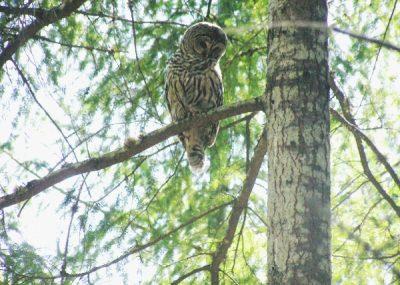 owl-jst