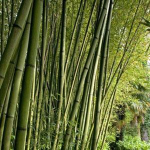 Bambu 7 gauge