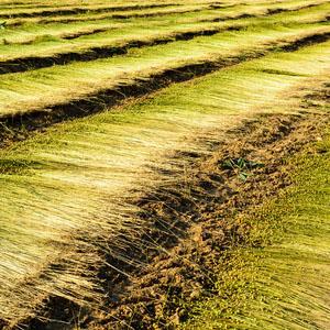 16/2 Organic Linen